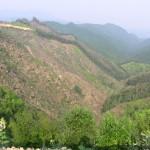 伐採された山